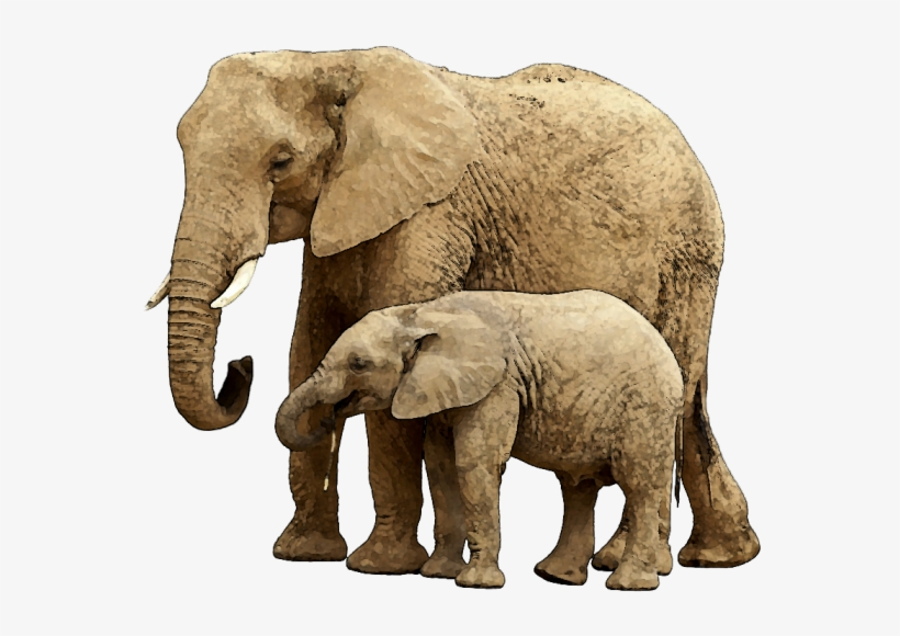 Baby Elephant Png Image With Transparent Background Elephant And Child 640x537 Png Download Pngkit Download free elephant png images. baby elephant png image with