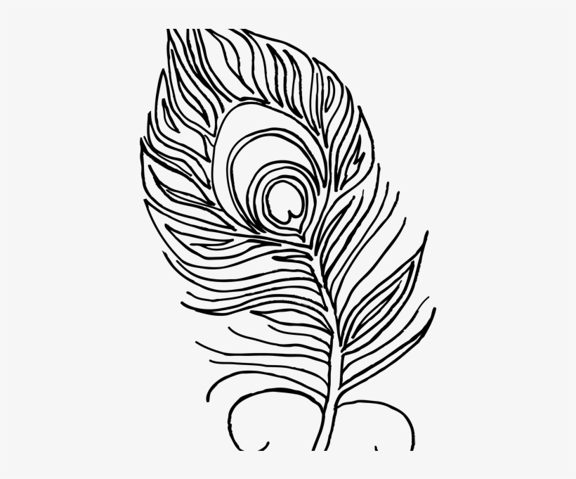 - Feather Coloring Book Peacock Feather Coloring Book - Peacock Feather  Colouring Pages - 516x600 PNG Download - PNGkit