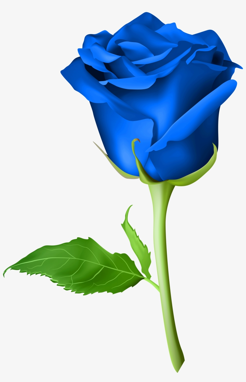 Roses Are Blue Blue Rose Png Hd 4744x7000 Png Download Pngkit