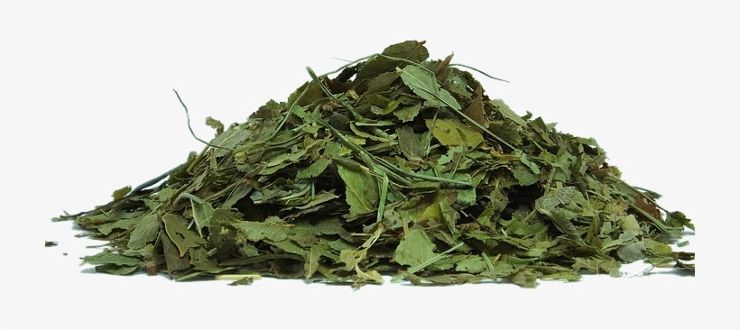 Herbs Png Tea Leaves Transparent Background 720x720 Png
