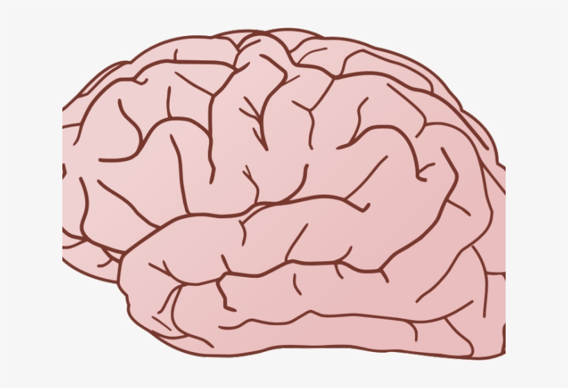 Brain Clipart Brain With No Background 640x480 Png Download Pngkit