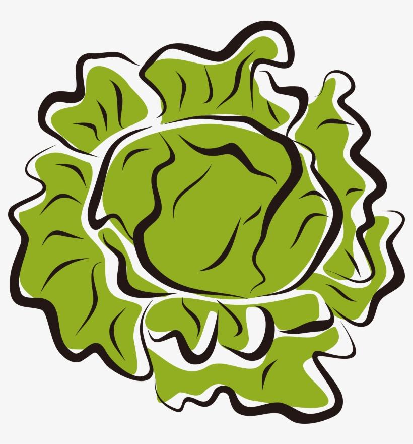 Download Hd Lettuce Leaf Cdr Transparent Image Clipart PNG Free |  FreePngClipart