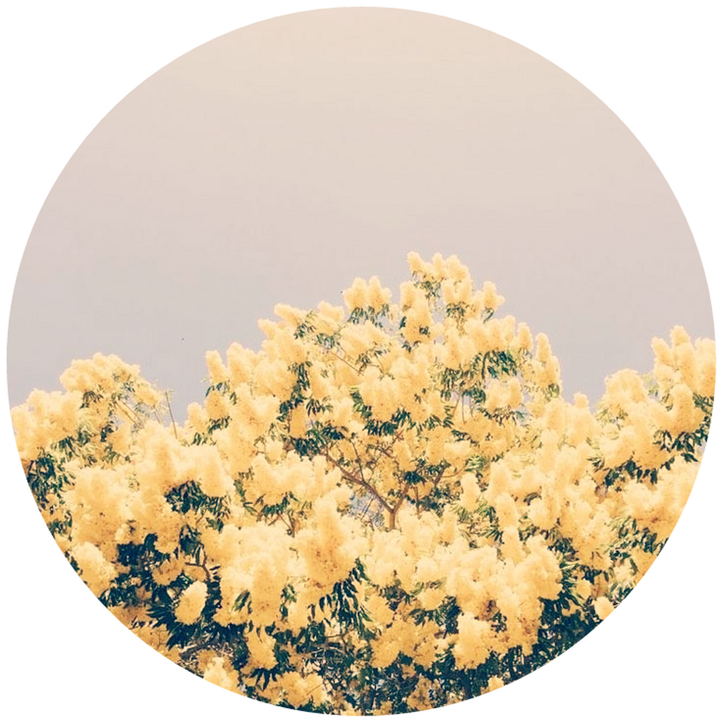 Download Yellow Flowers Yellowflowers Aesthetic Background Light Yellow And Blue Aesthetic Full Size Png Image Pngkit