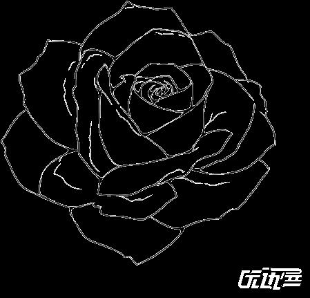 Flower Drawing Rose At Getdrawings Beginner Rose Drawings Easy Transparent Free Photos