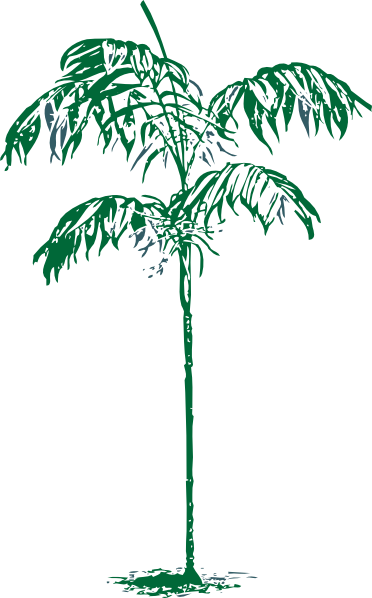 Download Sketch Clipart Palm Tree Palm Trees Sketches Clipart Full Size Png Image Pngkit