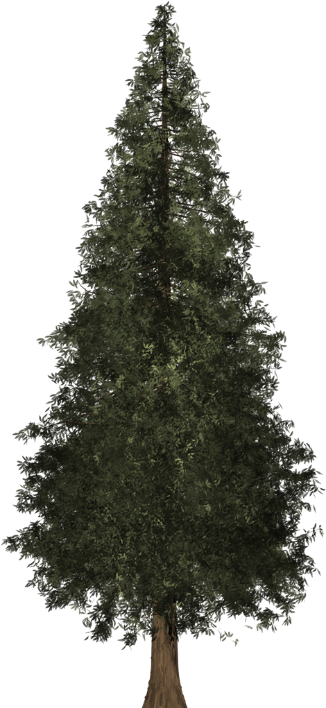 Download Redwood Tree Png Image Freeuse - Fir Tree 3d Model - Full