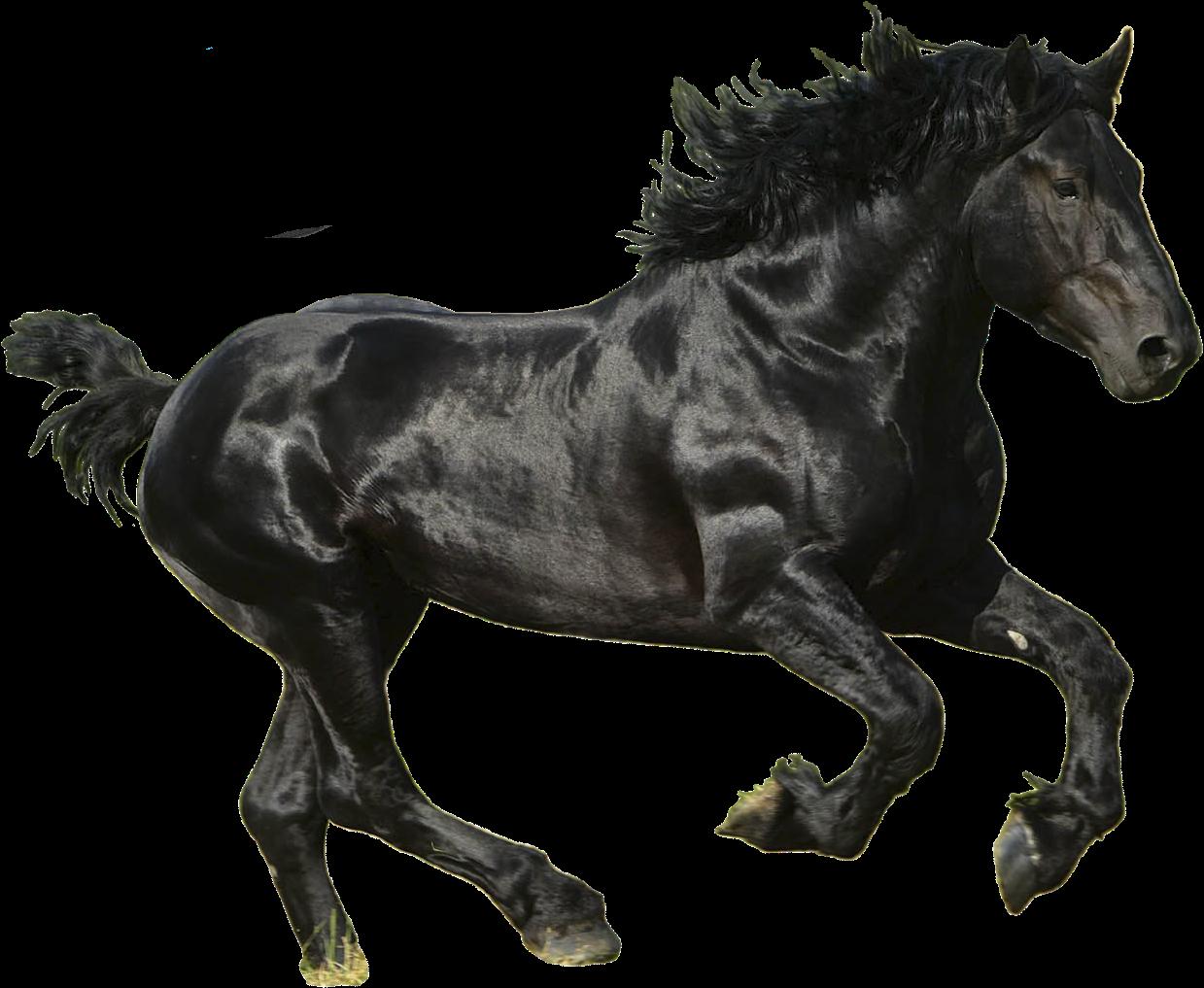 Download Download Png Image Report Black Horse Transparent Background Full Size Png Image Pngkit