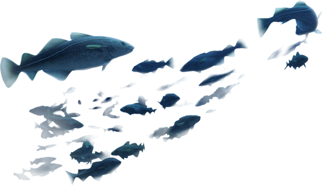 Download Cods Group Of Fish Png Full Size Png Image Pngkit Pnghunter is a free to use png gallery where you can download high quality transparent png images. download cods group of fish png