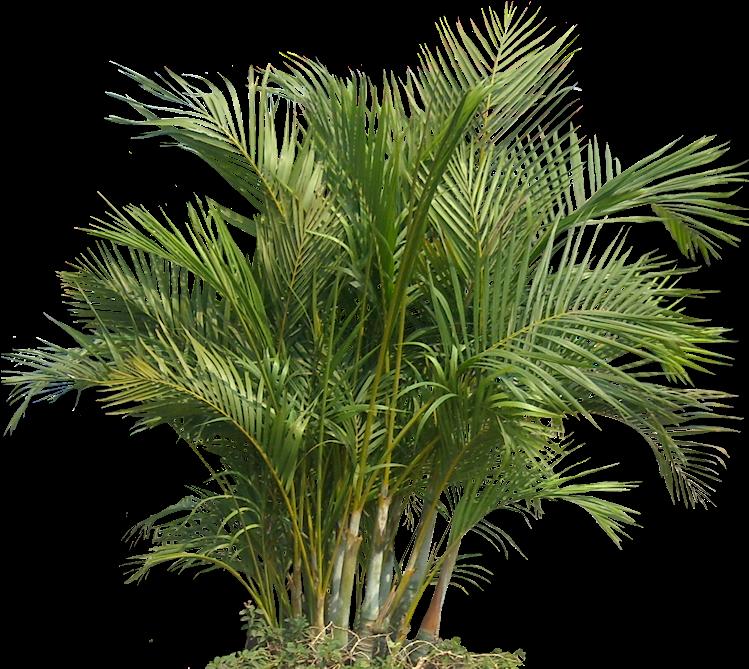 Download Transparent Tropical Plants Png - Tropical Plant ...