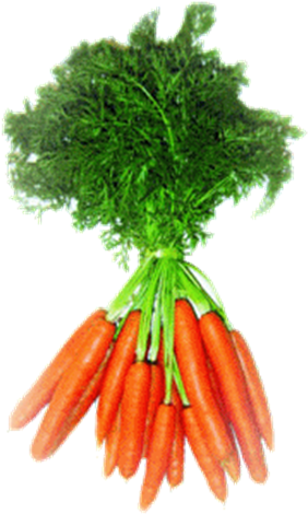 Download Las Zanahorias Y Los Beta Carotenos Hojas De Zanahoria Png Full Size Png Image Pngkit Zanahoria, illustration of carrot character transparent background png clipart. zanahoria png full size png image