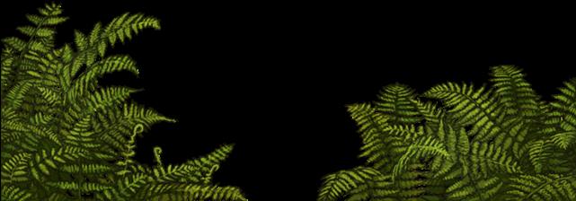 37-375489_jungle-fern-png.png