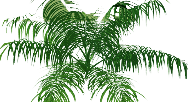Download Palm Tree Top View Png - Full Size PNG Image - PNGkit