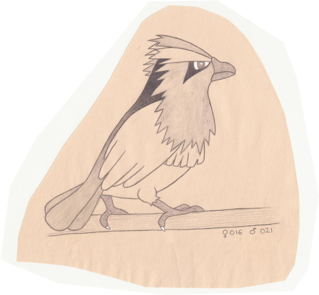 Download Tiny Bird Pokemon Sketch Full Size Png Image Pngkit