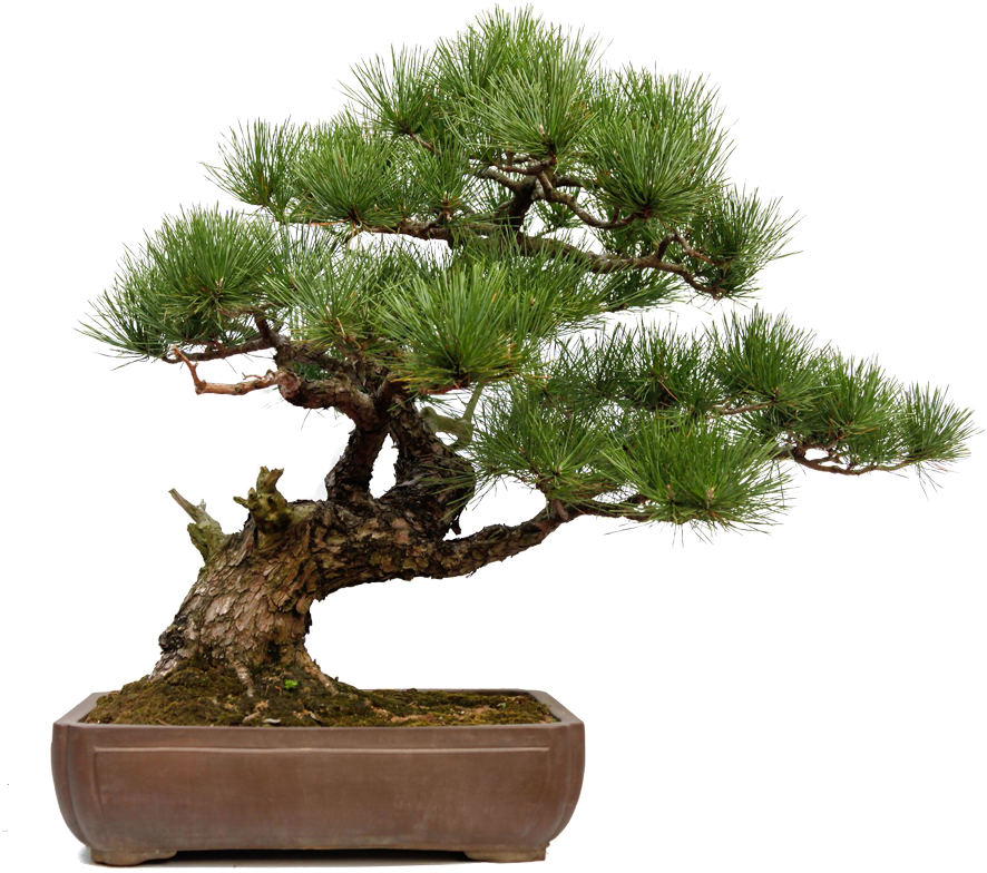 Download Skills Skills Skills Skills Bonsai Full Size Png Image Pngkit