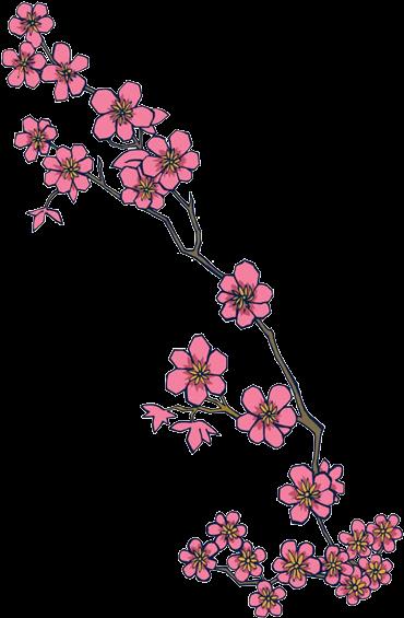 Download Ink Pencil Black White Flower Sketchtransparent Stock Cherry Blossom Design Transparent Full Size Png Image Pngkit