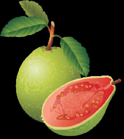 download guava png transparent images guava clipart full size png image pngkit download guava png transparent images