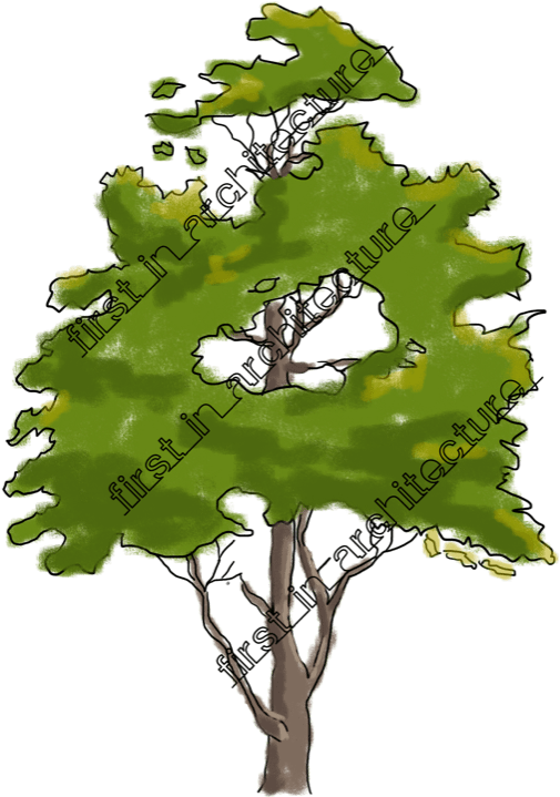 Download Plan Vector Tree Sketch Sketchy Tree Full Size Png Image Pngkit
