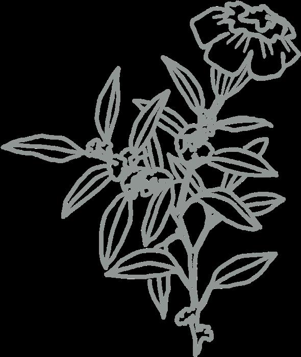 Download Flower 01 Sketch Full Size Png Image Pngkit