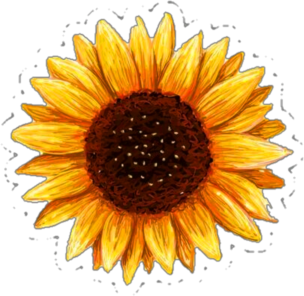 image regarding Printable Sunflower identified as Obtain Printable Sunflower Sticker - Entire Measurement PNG Picture