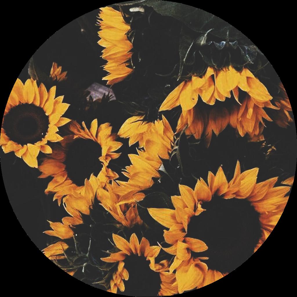 889 8893393 yellow sticker mustard yellow tumblr wallpaper quotes