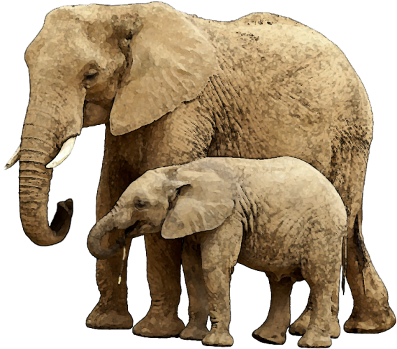 Download Baby Elephant Png Image With Transparent Background Elephant And Child Full Size Png Image Pngkit Find & download free graphic resources for elephant. download baby elephant png image with