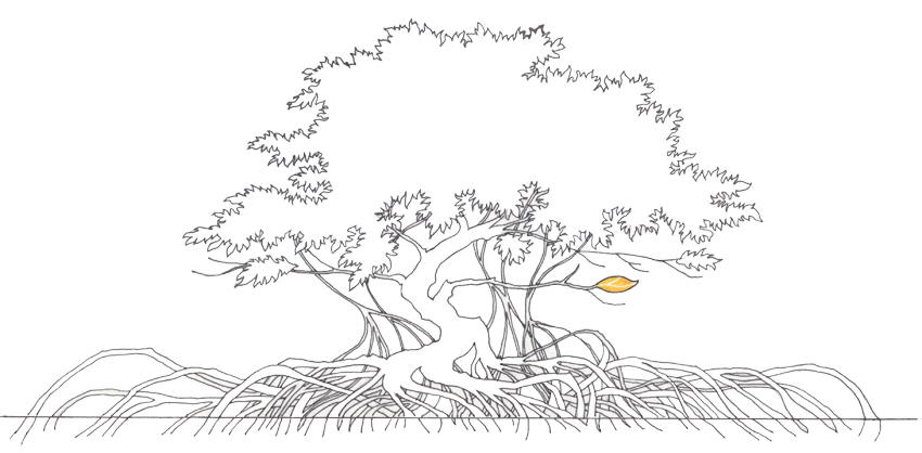 Download Collection Of Tree High Quality Free Mangrove Tree Sketch Full Size Png Image Pngkit