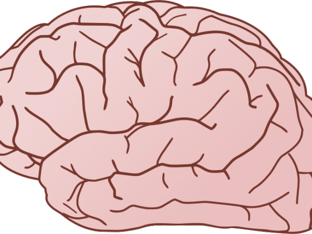 Download Brain Clipart Brain With No Background Full Size Png Image Pngkit